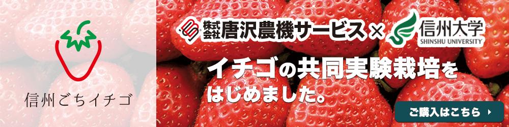 唐沢農機サービス×信州大学 いちごの共同実験栽培をはじめました。ご購入はこちら